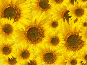 Sunflowers Patterned Background