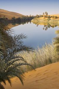 Sunlit, clear oasis in a sandy desert