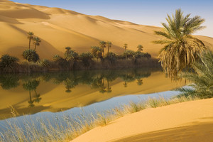 Sunlit oasis and lush vegetation in a sandy desert