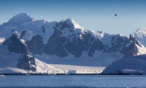 Sunlit, snowy coast under a blue sky with a bird flying overhead