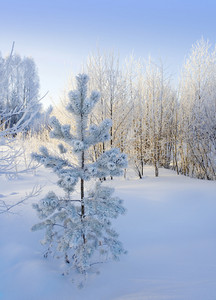 Sunlit, snowy trees in winter