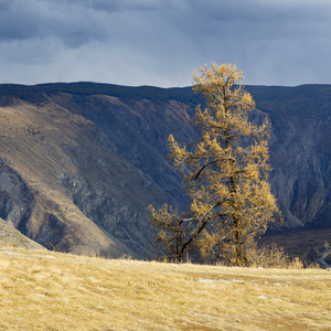 Sunlit tree at the edge of a mountain cliff under a stormy sky