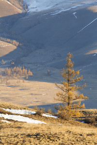 Sunlit tree before a frosty mountain valley