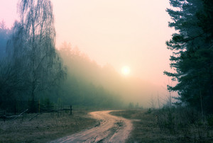 Sunrise in foggy forest