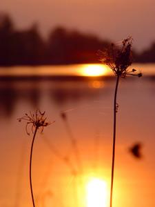 Sunset Silent