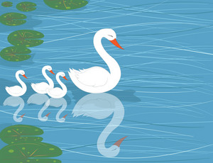 Swans On Water Vector Illustration