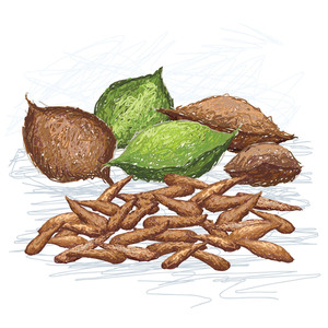 Talisay Nut