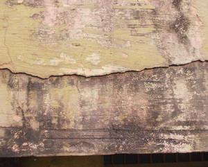 Texture 62