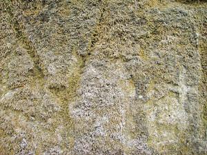 Texture_lichen