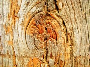 Texture_wooden