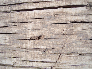 Textured_wood