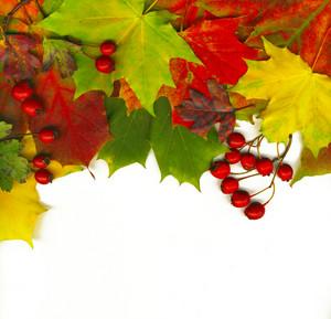 Thanksgiving Border From Orange Leaf