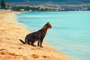 The cat is sitting on the beach