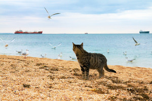 The cat is walking on the beach