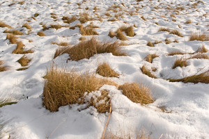 The melting snow reveals the dead grass beneath it in the field.