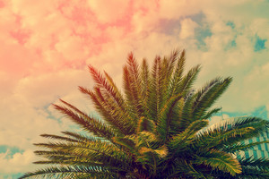 The top of palm trees on the cloudy sky background