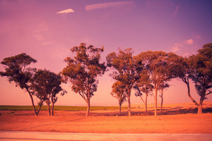 The trees along the road.