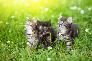 Three cute kittens in the meadow