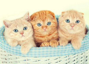 Three little kittens in the basket