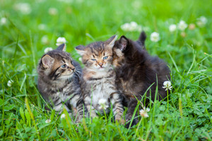 Three little kittens sitting on the grass