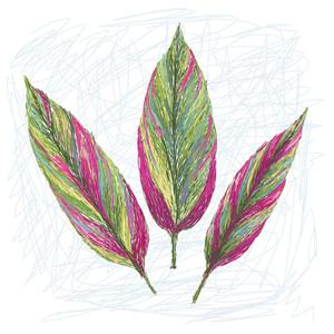 Ti Plant Leaf