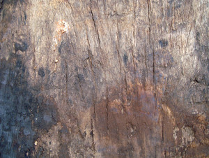 Timber_wood_background