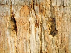 Timber_wood_texture