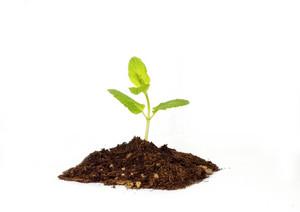 Tiny Baby Plant Concept