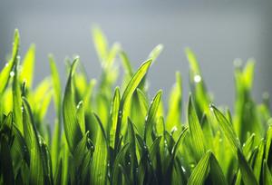 Tiny Grass Texture