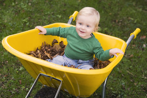 Toddler riding in wheelbarrow filled with autumn leaves