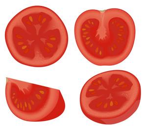 Tomato. Vector.