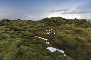 Traces of snow on mossy rocks at sunset