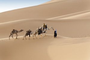 Traveler leading camels through a vast sandy desert