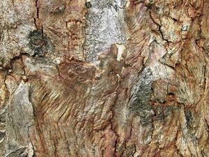 Tree Bark Grunge