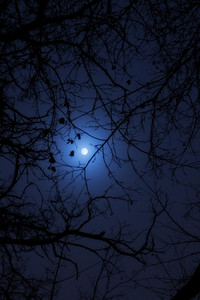 Tree Branches At Moon Night