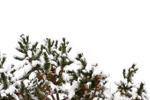 Tree Covered With Snow Background