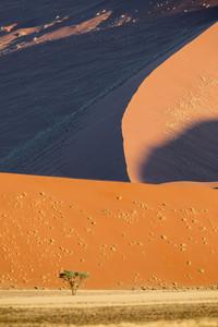 Tree growing along a sand dune