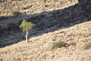 Tree growing on the rocky savanna