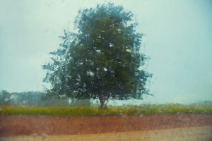 Tree in the field through the wet window
