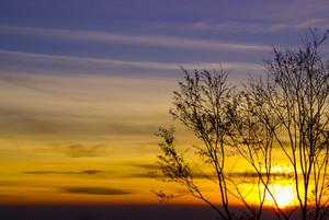 Árvore no nascer do sol ou pôr do sol