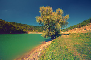 Tree on the shores of mountain lakes