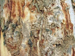 Tree_bark_background