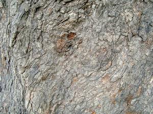 Tree_bark_skin
