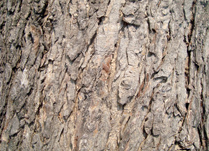 Tree_bark_texure