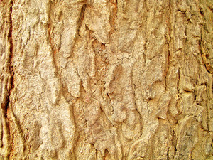 Tree_bark_wood_texture
