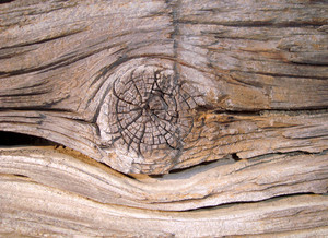 Tree_knot_texture