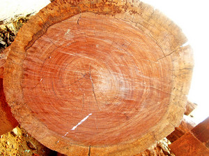 Tree_lumber
