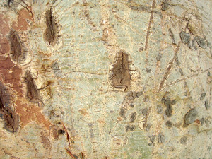Tree_skin_texture