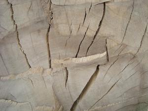 Tree_trunk_cracked