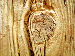Tree_trunk_knot